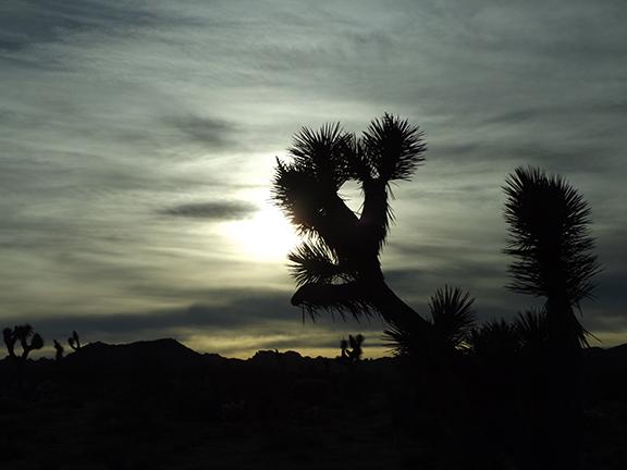 Joshua-Tree-National-Park15