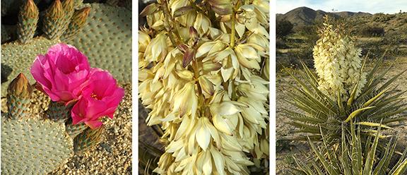 Joshua-Tree-National-Park18