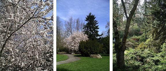 Kubota-Garden-spring-Seattle10