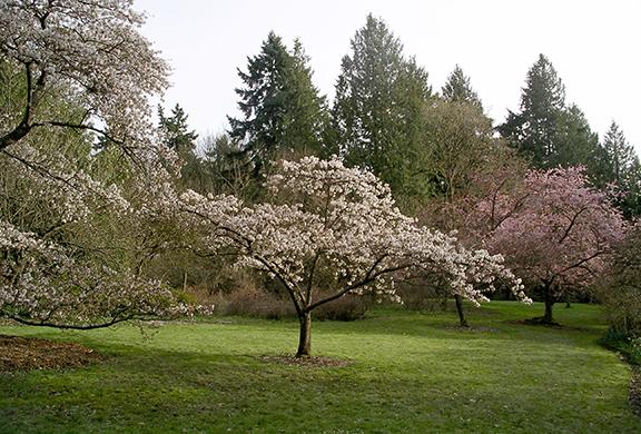 Kubota-Garden-spring-Seattle2