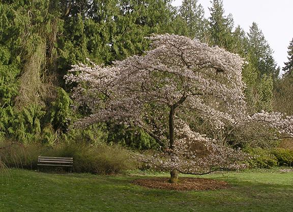 Kubota-Garden-spring-Seattle3