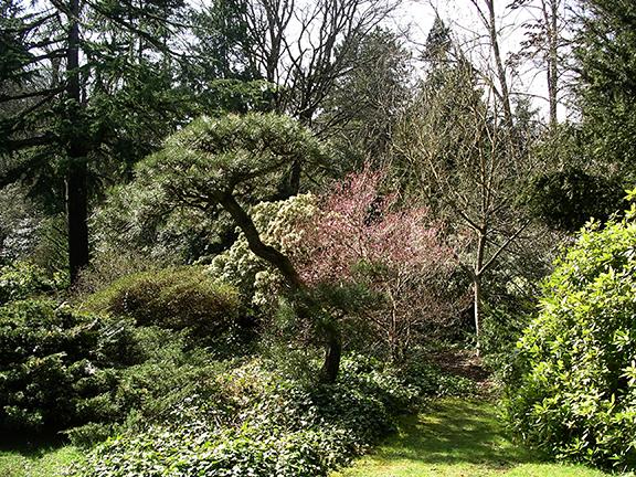 Kubota-Garden-spring-Seattle5