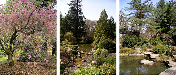 Kubota-Garden-spring-Seattle7