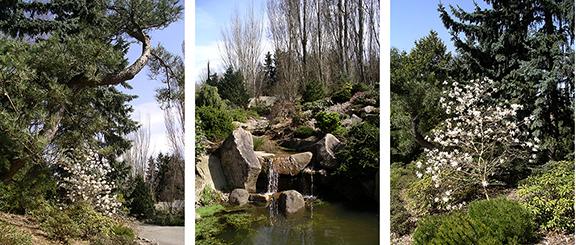 Kubota-Garden-spring-Seattle8