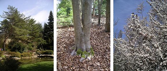 Kubota-Garden-spring-Seattle9