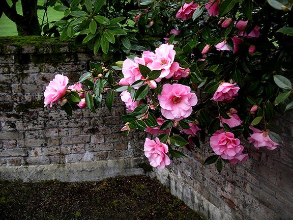 Lakewold-Gardens15