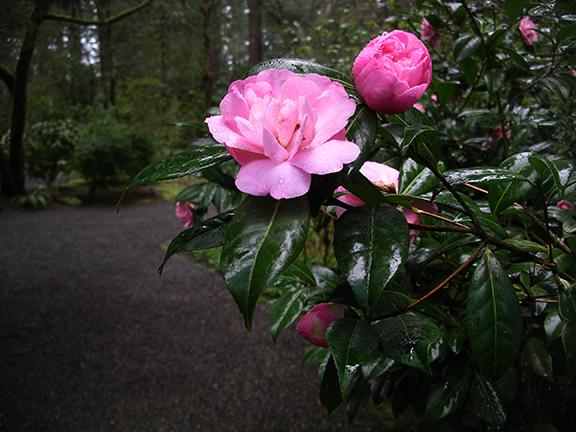 Lakewold-Gardens19