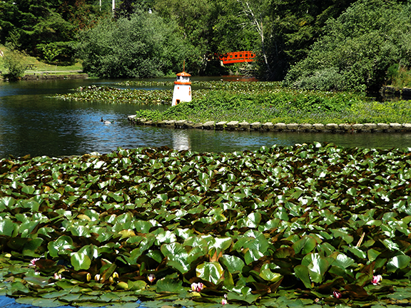 Lily-pads-Mingus-Park-Coos-Bay
