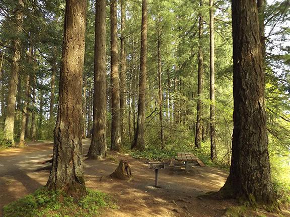 Main-Trail-Lacamas-Regional-Park