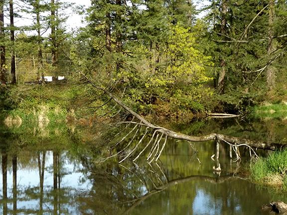 Mill-Pond-Lacamas-Regional-Park
