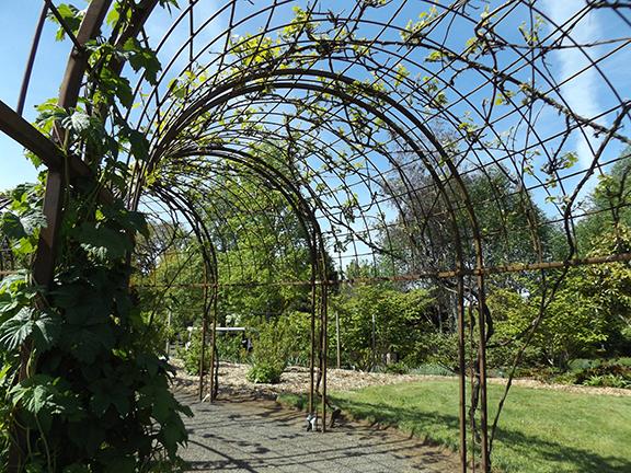 Oregon-Garden-Silverton18