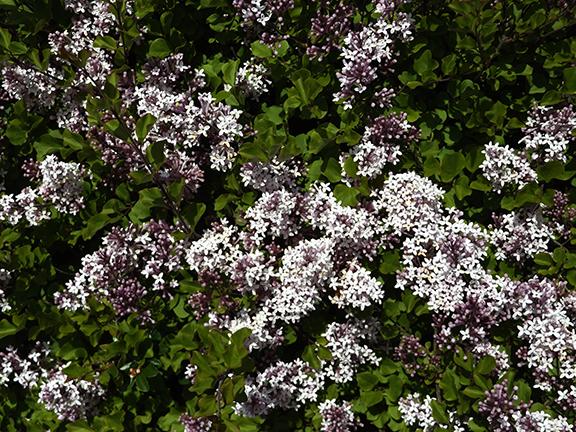Oregon-Garden-Silverton4