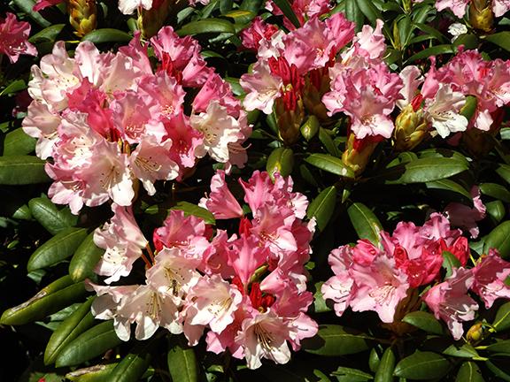 Oregon-Garden-Silverton8
