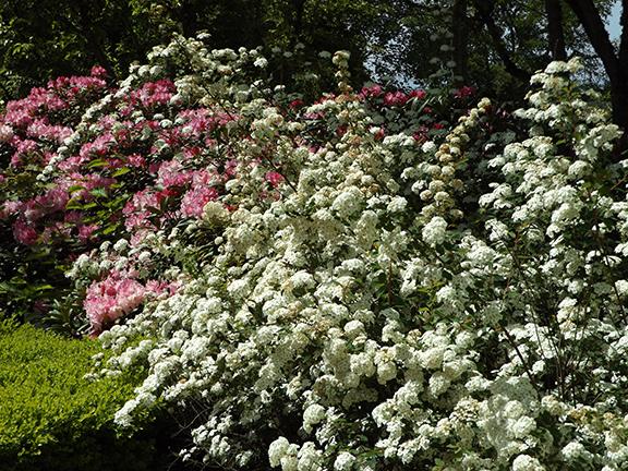 Oregon-Garden-Silverton9