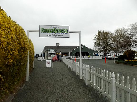 Roozengaarde-entrance-Skagit-Valley