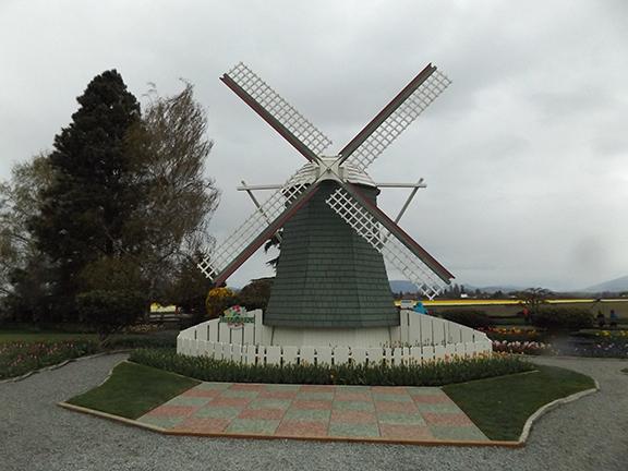 Roozengaarde-windmill-Skagit-Valley