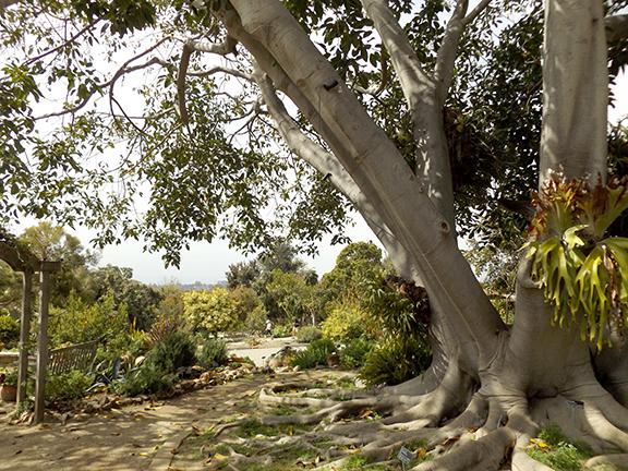 San-Diego-Botanical-Garden11