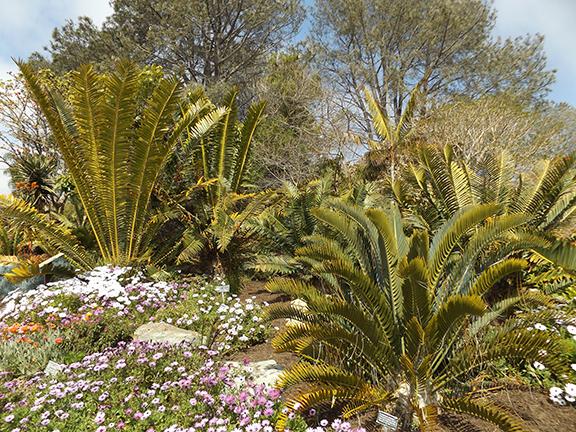 San-Diego-Botanical-Garden13
