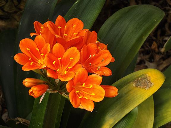 San-Diego-Botanical-Garden14