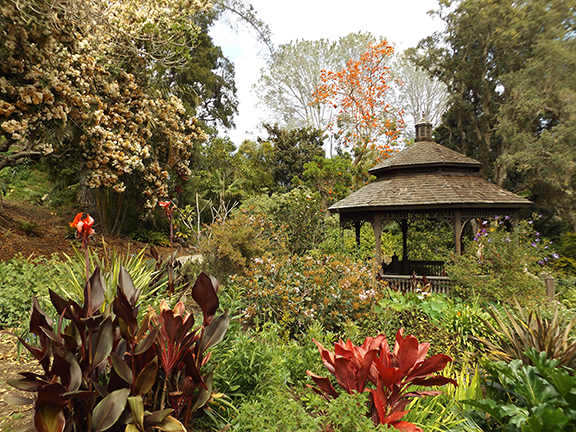San-Diego-Botanical-Garden16