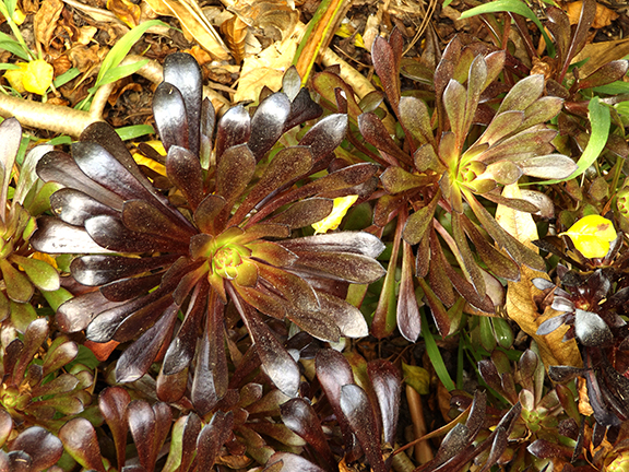 San-Diego-Botanical-Garden18