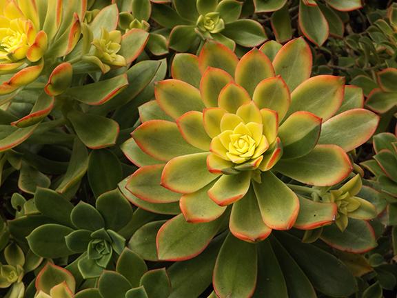 San-Diego-Botanical-Garden19