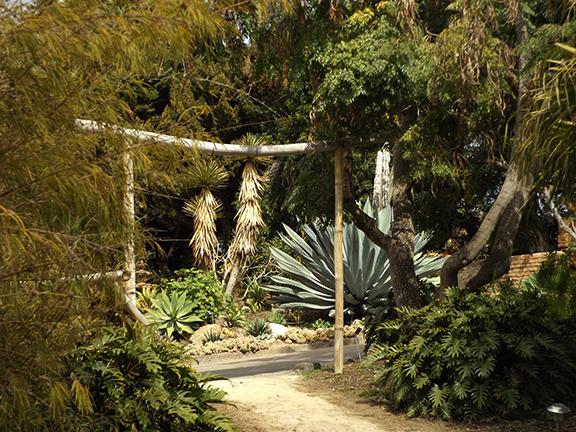 San-Diego-Botanical-Garden22