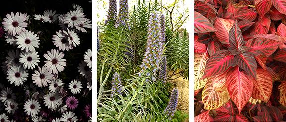 San-Diego-Botanical-Garden25