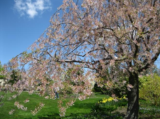 Tower-Hill-Botanic-Garden9