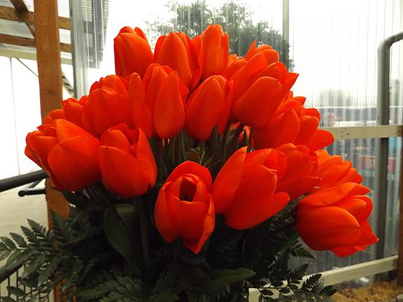 Tulip-Town-Skagit-Valley2