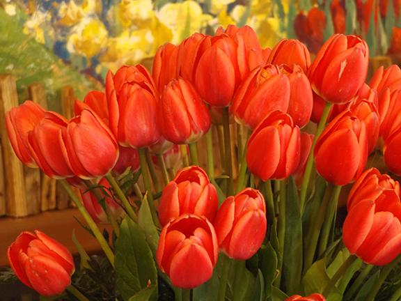 Tulip-Town-Skagit-Valley5