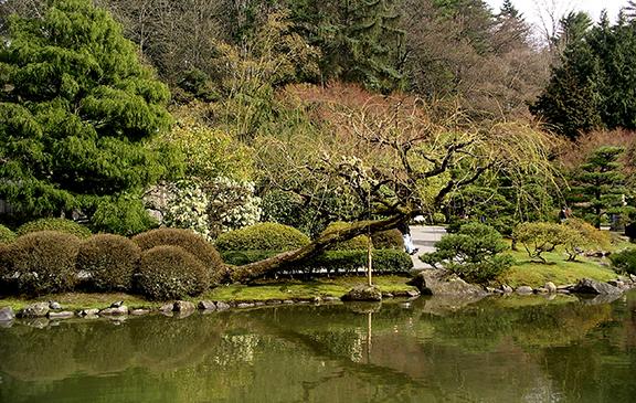 Washington-Park-Arboretum-Seattle-spring2
