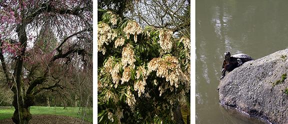 Washington-Park-Arboretum-Seattle-spring3