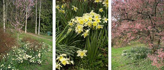 Washington-Park-Arboretum-Seattle-spring5