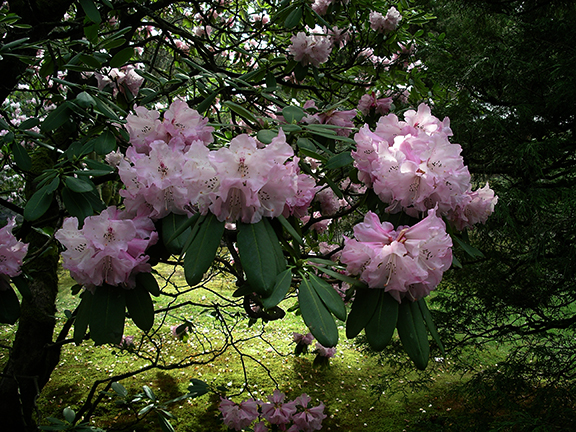 Washington-Park-Arboretum-Seattle-spring6