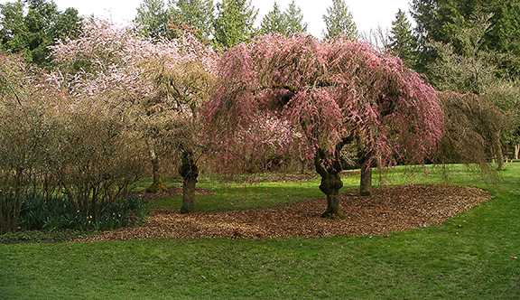 Washington-Park-Arboretum-Seattle-spring7