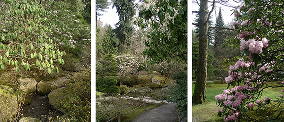 Washington-Park-Arboretum-Seattle-spring8