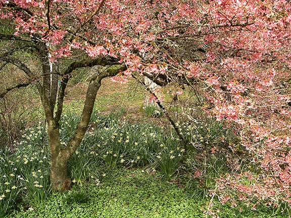 Washington-Park-Arboretum-Seattle-spring9