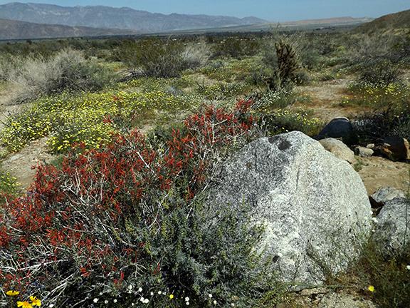 Anza-Borrego-Desert-State-Park13
