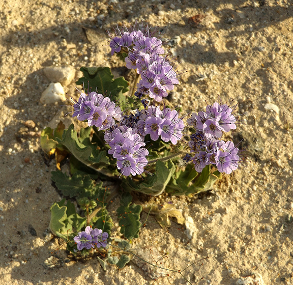 Anza-Borrego-Desert-State-Park17