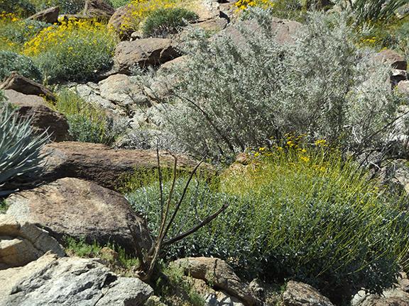 Anza-Borrego-Desert-State-Park19