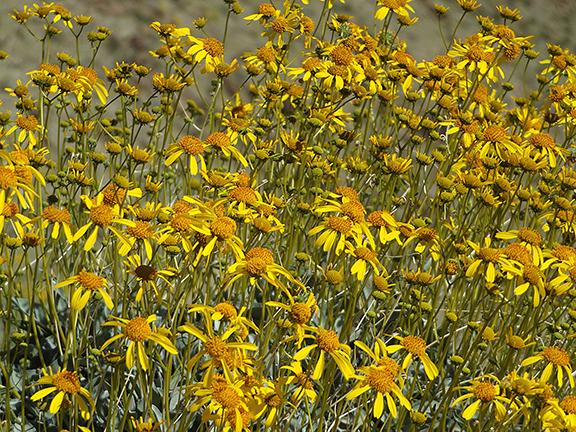 Anza-Borrego-Desert-State-Park20
