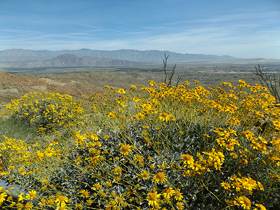 Anza-Borrego-Desert-State-Park22