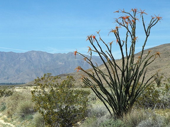 Anza-Borrego-Desert-State-Park24