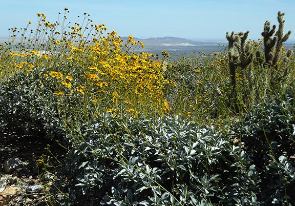 Anza-Borrego-Desert-State-Park6