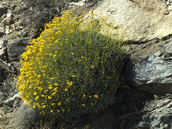 Anza-Borrego-Desert-State-Park7