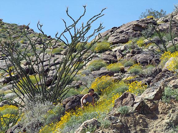 Anza-Borrego-Desert-State-Park8
