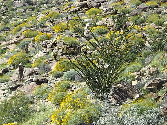 Anza-Borrego-Desert-State-Park9