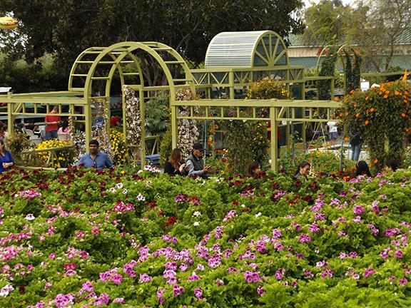 Flower-Fields-Carlsbad-California14