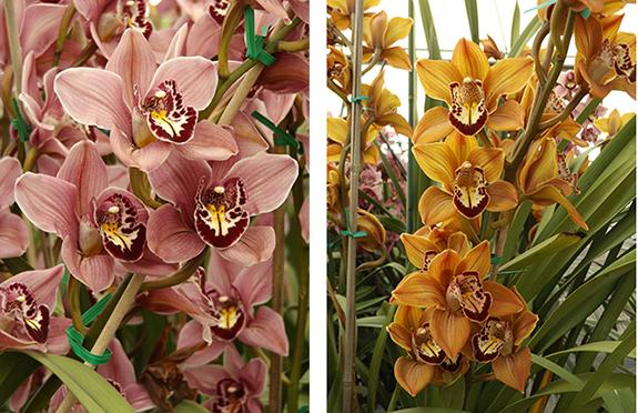 Flower-Fields-Carlsbad-California25